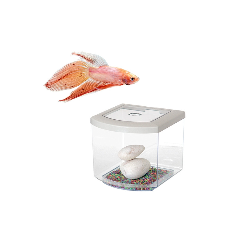 BETTACUB 7 LITROS BLANCO CON PLANTA Y GRAVA DECO + BETTA MACHO