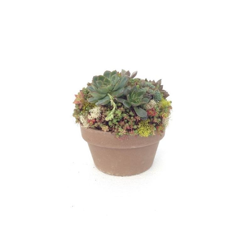Centro crasas ceramico maceta 22cm verdecora for Plantas crasas interior