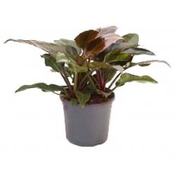 planta verde surtido variado - Plantas Verdes De Interior