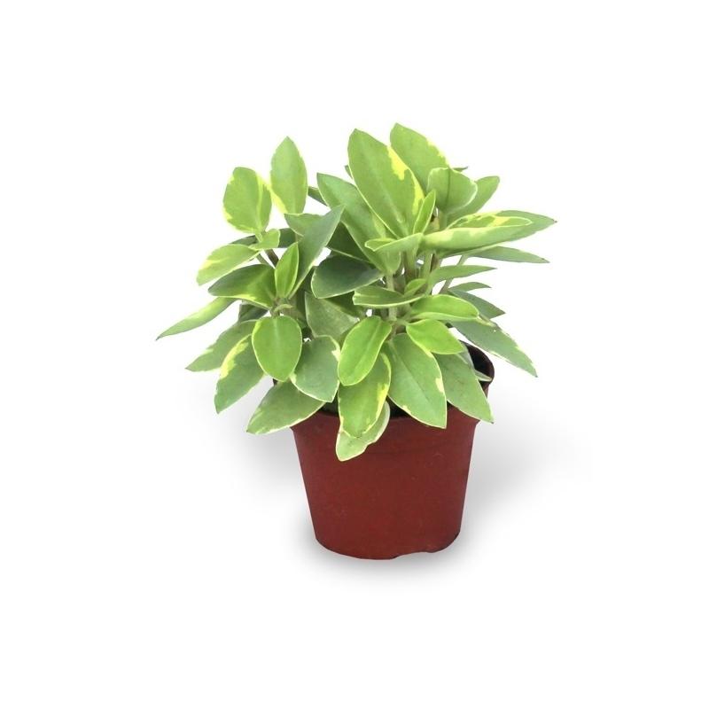 planta verde de interior variada