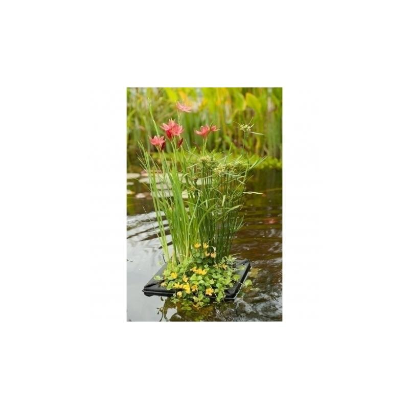 Plantas de estanque en anillo flotante for Plantas de estanque