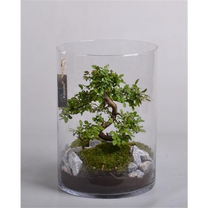 Terrario bonsai diametro 25cm altura 23cm verdecora - Bonsai verdecora ...