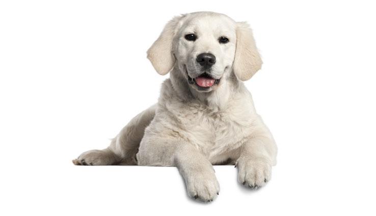 Cojines y colchones para perros blog verdecora - Colchones pequenos ...