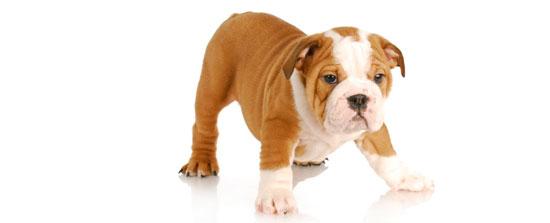 Llevar a tu mascota al trabajo blog verdecora - Verdecora mascotas ...