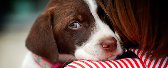 3 cosas buenas que puede aportar a tus hijos tener una - Verdecora mascotas ...