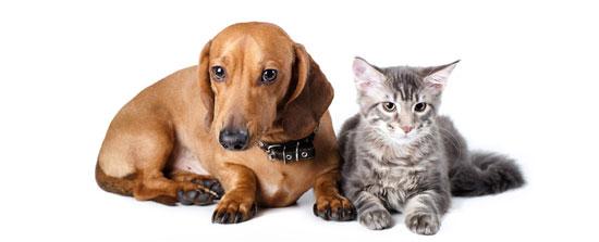 Repelentes de perros y gatos blog verdecora - Verdecora mascotas ...