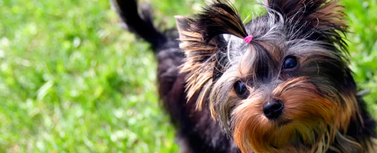 Razas de perros recomendadas para personas mayores blog - Verdecora mascotas ...