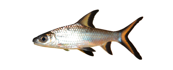 Pez de agua fr a o pez de agua caliente blog verdecora for Clases de peces de acuario