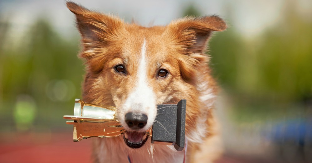 Adoptar perros y adiestramiento fin de semana verdecora - Verdecora mascotas ...