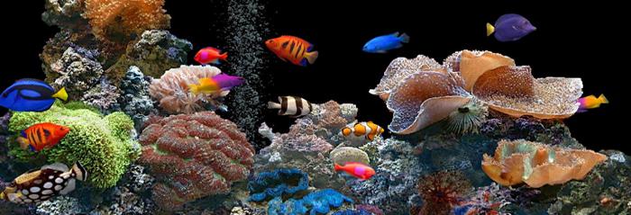 Un acuario que también es una mesa.   blog verdecora