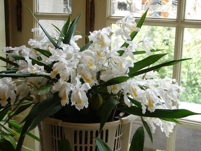 Un tiesto colgante es un lugar perfecto para disfrutar de ella en plena floración