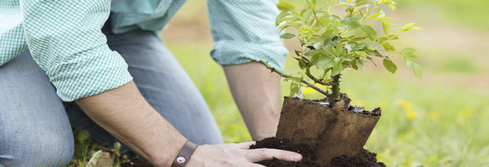 Plantar arboles frutales blog verdecora - Cuando plantar frutales ...