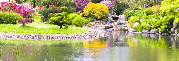 Cuidados del estanque verdecora for Cuidados del jardin