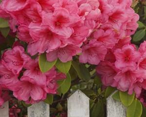 Planta ornamental archivos blog verdecora for Tres plantas ornamentales