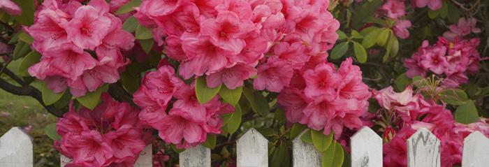 Tres preciosas plantas ornamentales para el jard n blog for Tres plantas ornamentales