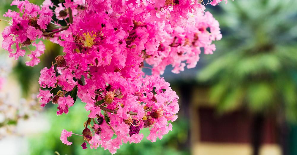 Flores de verano para vivir el sol blog verdecora - Flores de verano ...