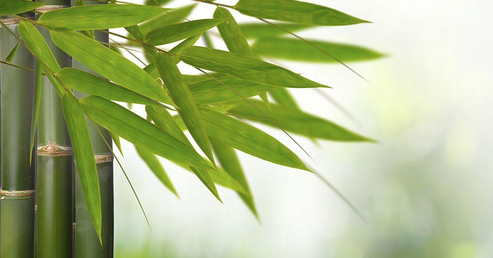 Bamb el acero vegetal de oriente blog verdecora - Bambu planta exterior ...