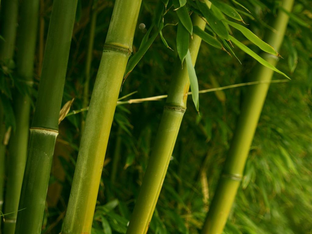 Bamb El Acero Vegetal De Oriente Blog Verdecora ~ Cañas De Bambu Verdes Para Decorar