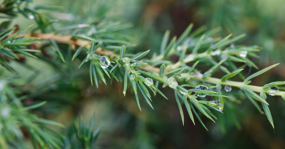 Con feras el bosque en el jard n consejos verdecora for Coniferas de jardin