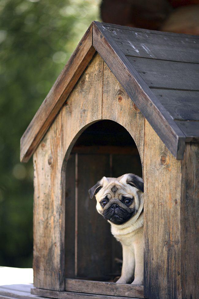 C mo elegir una caseta de perro blog verdecora - Caseta perro carrefour ...