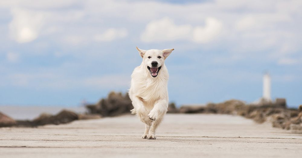 Viajar con mascotas consejos verdecora - Verdecora mascotas ...