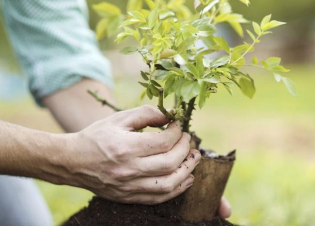 Oto o el momento de plantar frutales y arbustos blog - Cuando plantar frutales ...