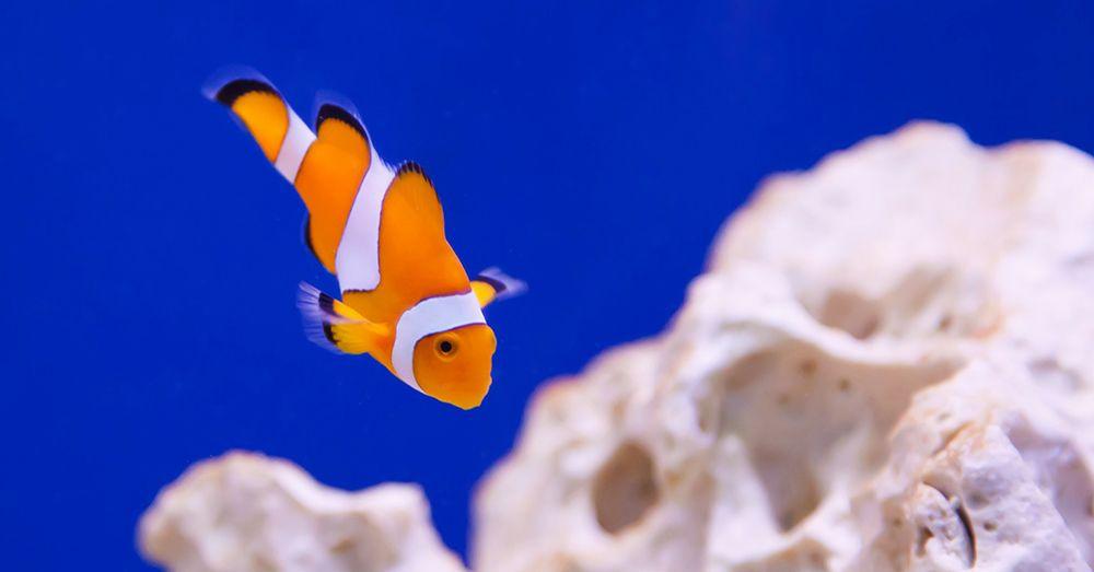 Acuario c mo elegir el termocalentador blog verdecora for Calentador acuario