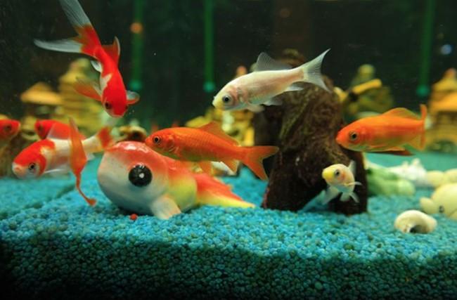 Peces y tortugas mascotas perfectas para ni os blog for Peces para acuarios pequenos