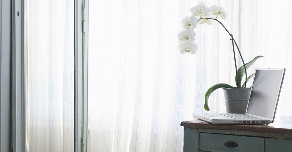 decorar-con-orquideas-verdecora