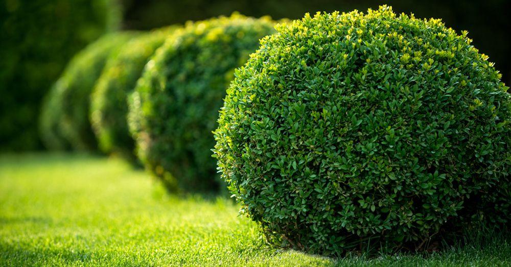 Cinco arbustos perfectos para el fr o consejos verdecora for Arbustos con flores para jardin