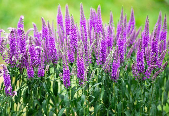 Cinco arbustos perfectos para el fr o blog verdecora - Arbustos de jardin ...