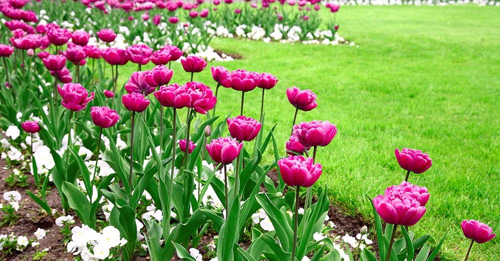 Cinco claves para el dise o de jardines blog verdecora for Diseno de jardines