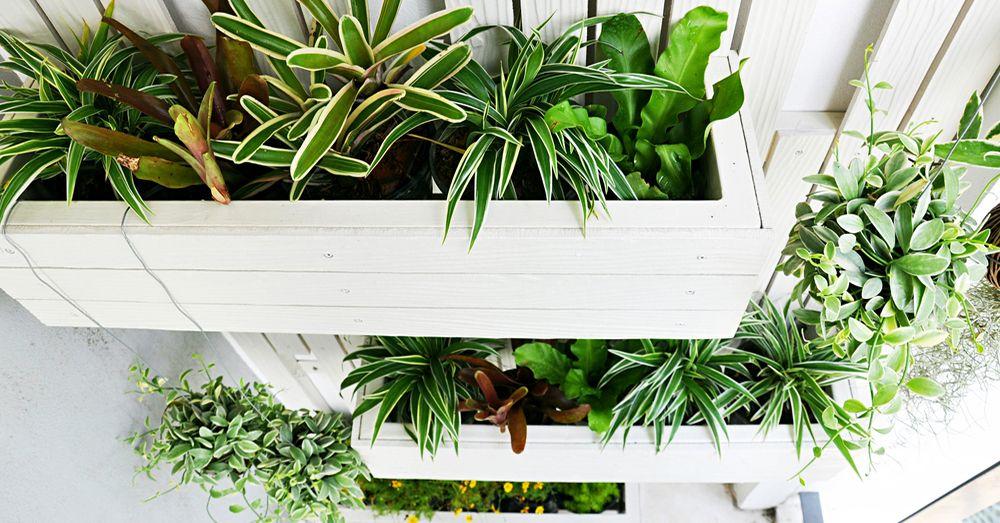Jardines verticales cuatro consejos consejos verdecora - Plantas para jardines verticales ...
