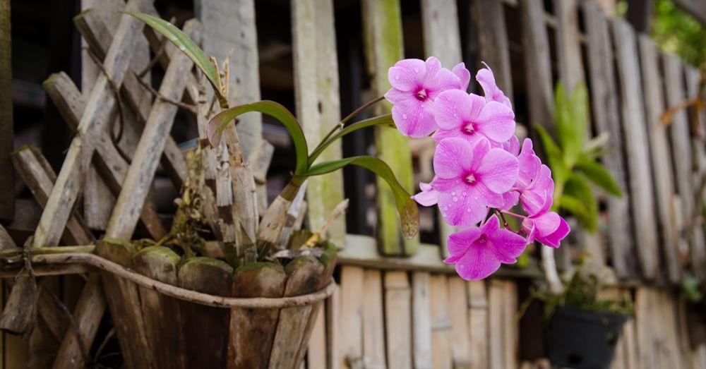 Orquídeas: el peligro del exceso de agua