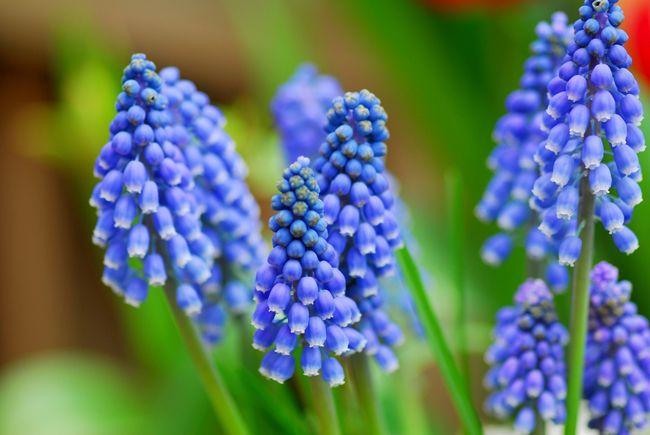 5 bulbos que todav a puedes plantar blog verdecora