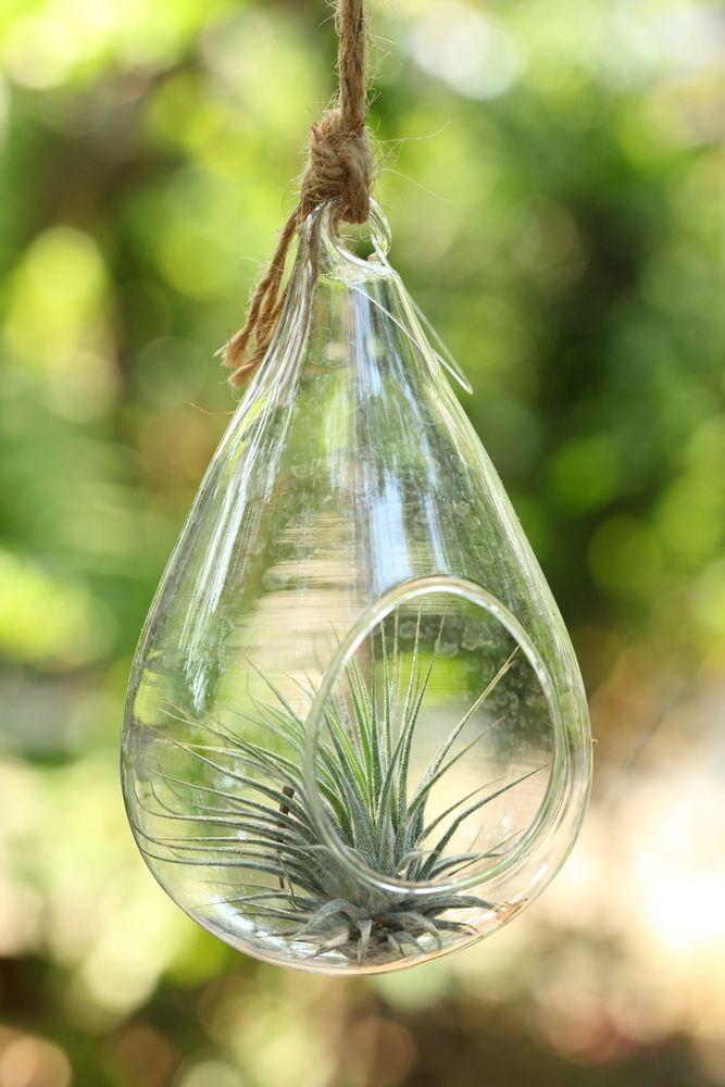 Plantas suculentas: riego moderado