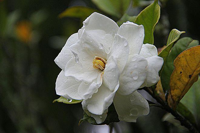 Tipos de plantas de interior con flor blog verdecora - Plantas de interior que no necesitan luz ...