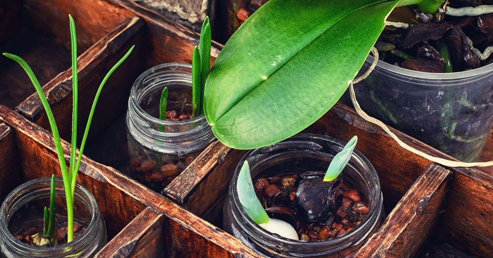 Tipos de plantas de interior con flor blog verdecora - Tipos de plantas de interior ...