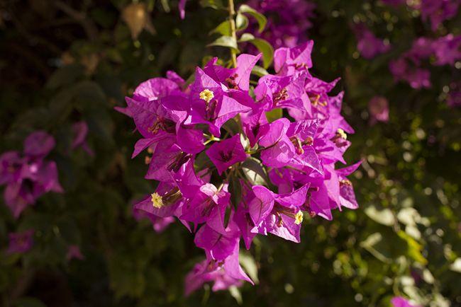 Elegir plantas ornamentales blog verdecora for Plantas ornamentales