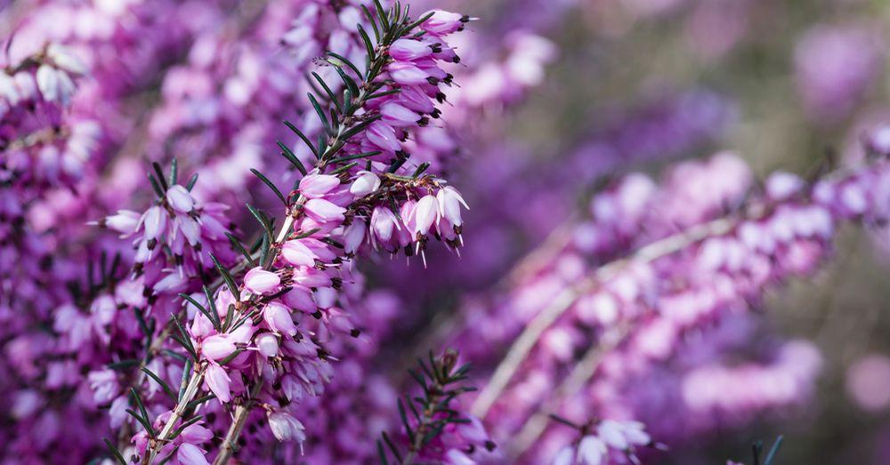 Elegir plantas ornamentales consejos verdecora for Plantas ornamentales helechos