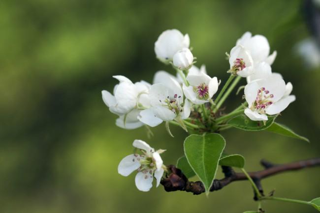 Cuidados de los árboles frutales en primavera