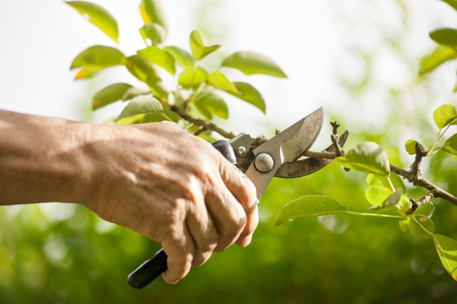 Cuidados de árboles frutales en primavera