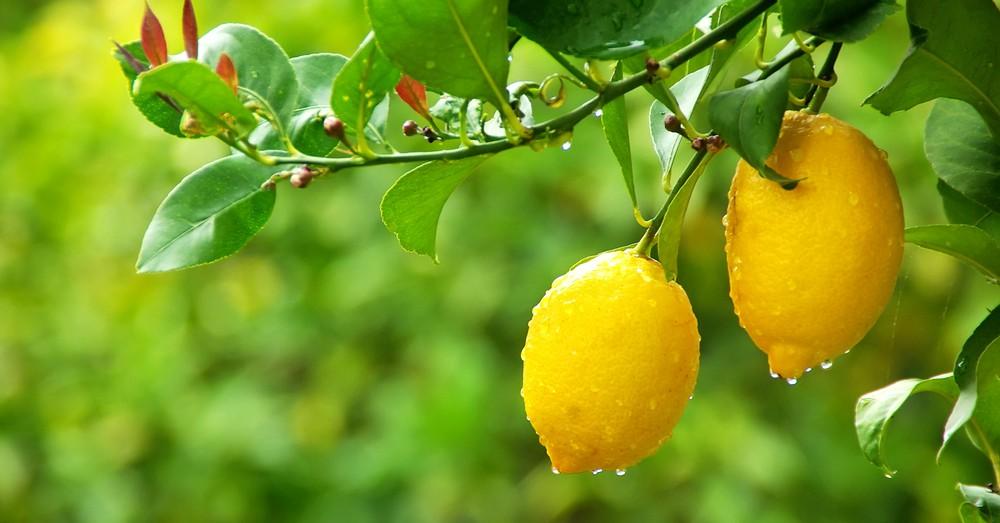 Cuidados de rboles frutales en primavera Blog Verdecora