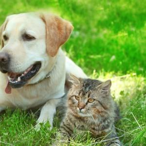 Bienestar animal archivos blog verdecora - Verdecora mascotas ...