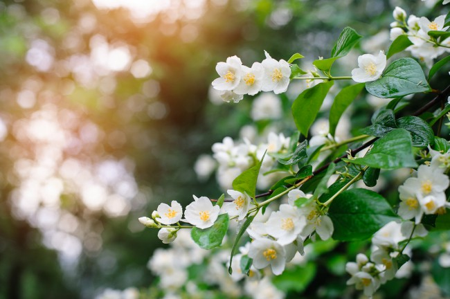 perfume natural cuatro plantas con olor blog verdecora