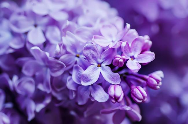 Perfume natural cuatro plantas con olor blog verdecora for Jardin lilo