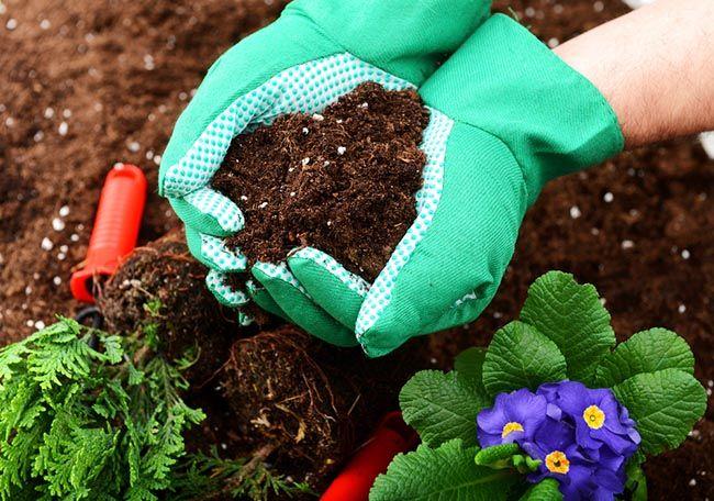 C mo preparar el suelo para la primavera blog verdecora for Como esta constituido el suelo