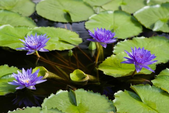 La puesta a punto del estanque blog verdecora for Plantas estanque