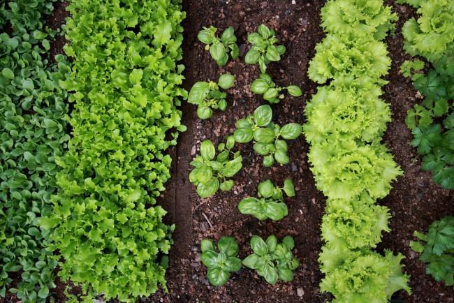 Calendario del huerto: qué plantar en abril - Blog Verdecora