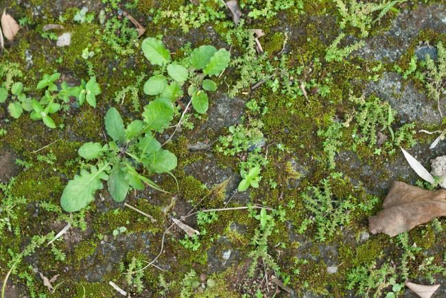 El jard n la otra casa blog verdecora for Como quitar la mala hierba del jardin